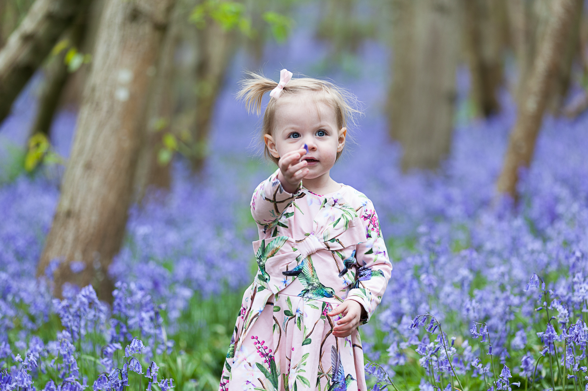 April 2020 – BLUEBELL MINI PHOTOSHOOTS DA2 AND TN15 booking now open