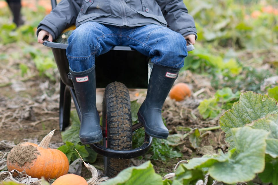 Pumpkin Picking in Kent – where to go